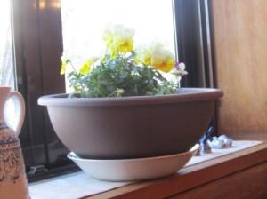 6.樅の木山荘・食堂のディジー